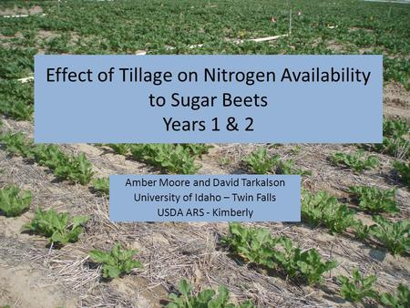Effect of Tillage on Nitrogen Availability to Sugar Beets Years 1 & 2 Amber Moore and David Tarkalson University of Idaho – Twin Falls USDA ARS - Kimberly.