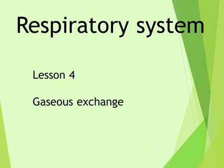 Respiratory system Lesson 4 Gaseous exchange. LO – Level 4 –To state where oxygen gets into the blood and how it is transported around the body. Level.