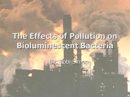 The Effects of <strong>Pollution</strong> on Bioluminescent Bacteria By: Tobi Simon.
