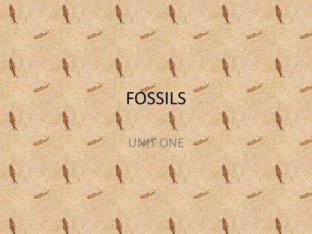 FOSSILS UNIT ONE.