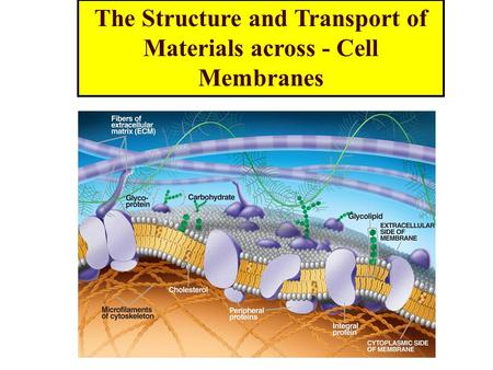 The Structure and Transport of Materials across - Cell Membranes