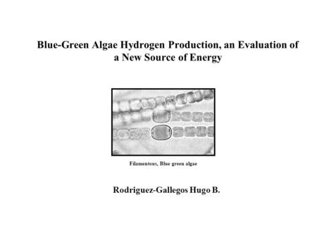 Blue-Green Algae Hydrogen Production, an Evaluation of a New Source of Energy Rodriguez-Gallegos Hugo B. Filamentous, Blue green algae.