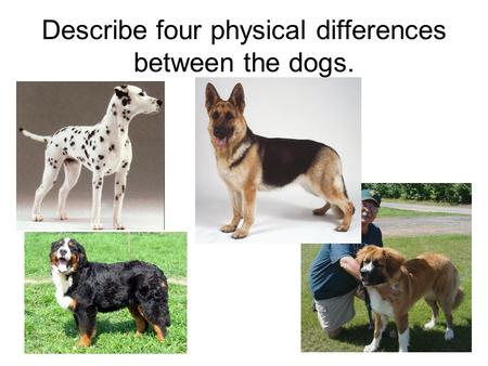 Describe four physical differences between the dogs.