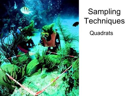 Sampling Techniques Quadrats. Sampling The best way to get information about a particular ecosystem would be to count every individual of every species.