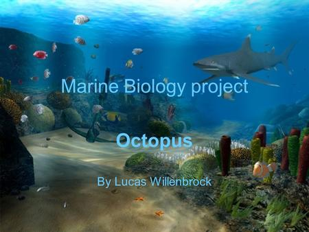 Marine Biology project Octopus By Lucas Willenbrock.
