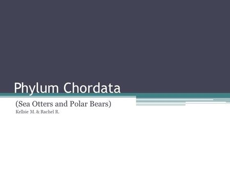 Phylum Chordata (Sea Otters and Polar Bears) Kellsie M. & Rachel R.