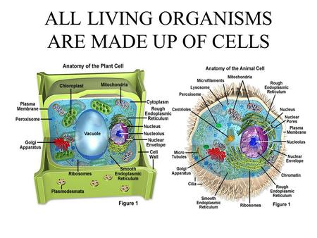 ALL LIVING ORGANISMS ARE MADE UP OF CELLS