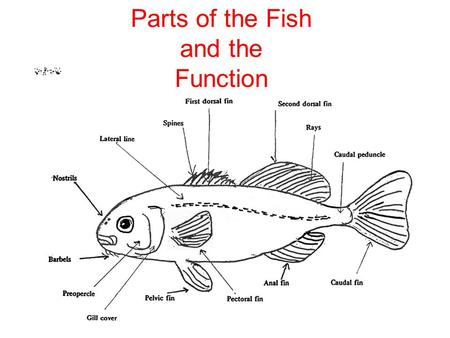 Parts of the Fish and the Function