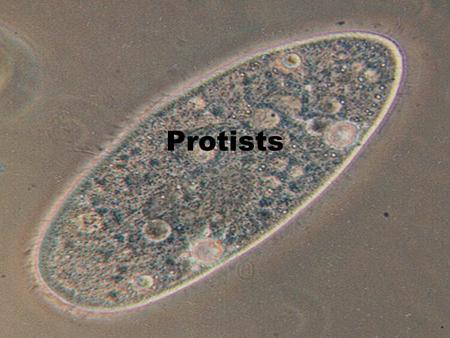 Protists. The Protists Protists are unicellular eukaryotic cells. (Unlike bacteria which are unicellular prokaryotic cells.) Do you remember the differences.