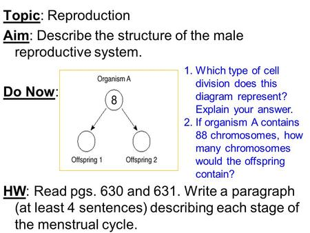 Topic: Reproduction Aim: Describe the structure of the male reproductive system. Do Now: HW: Read pgs. 630 and 631. Write a paragraph (at least 4 sentences)