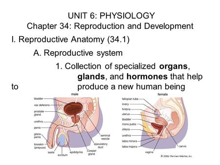 UNIT 6: PHYSIOLOGY Chapter 34: Reproduction and Development I. Reproductive Anatomy (34.1) A. Reproductive system 1. Collection of specialized organs,