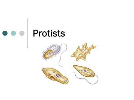 "Protists. What is a Protist? The Protist Kingdom is also known as the ""Junk Drawer Kingdom"". THINK! What does this nickname imply about the kingdom? The."