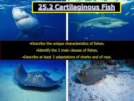 25.2 Cartilaginous Fish Describe the unique characteristics of fishes. Identify the 2 main classes of fishes. Describe at least 3 adaptations of sharks.
