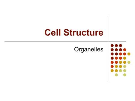 Cell Structure Organelles. B. Organelles (little organs) 1. Control a. Nucleus -contains genetic material -stores DNA -surrounded by a double membrane.