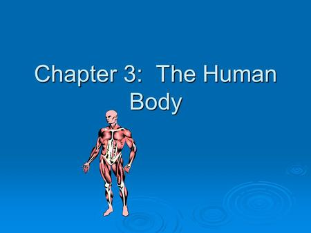Chapter 3: The Human Body. Body Cells  Form tissues  Tissues form Organs  Organs form Systems (e.g., digestive)  Turnover  Require nutrients.
