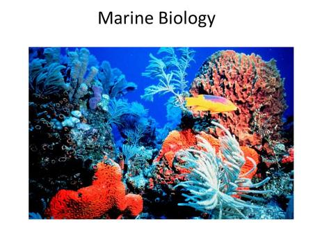 Marine Biology. Ocean Habitats A. There are two major marine provinces: the benthic (bottom) and the pelagic (water column). – 1. The benthic environment.