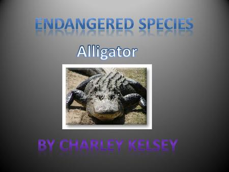 The Alligator has two front feet and two back feet. The Alligator has sharp claws. Some people believe that Alligator feet are lucky.