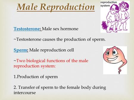 Male Reproduction Testosterone: Male sex hormone ~Testosterone causes the production of sperm. Sperm: Male reproduction cell ~Two biological functions.