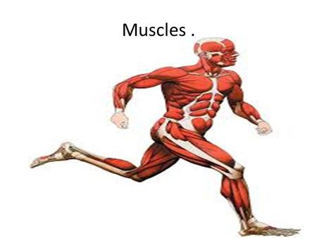 Muscles ..