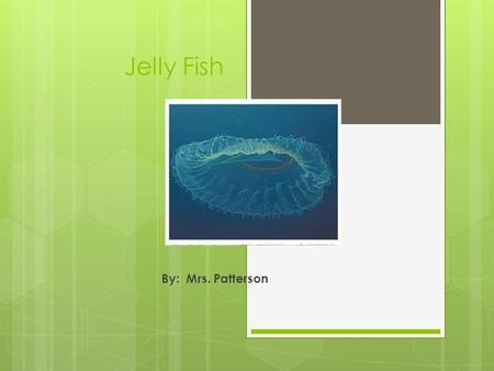 Jelly Fish By: Mrs. Patterson.