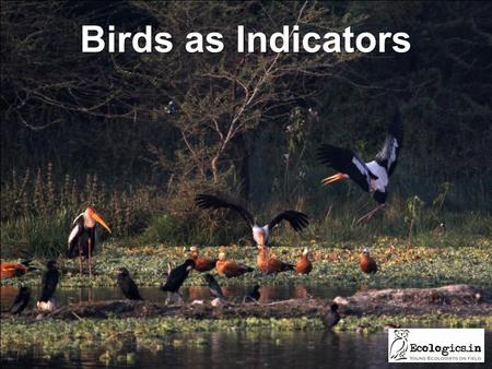 Birds as Indicators. Healthy water bodies for a healthy planet.