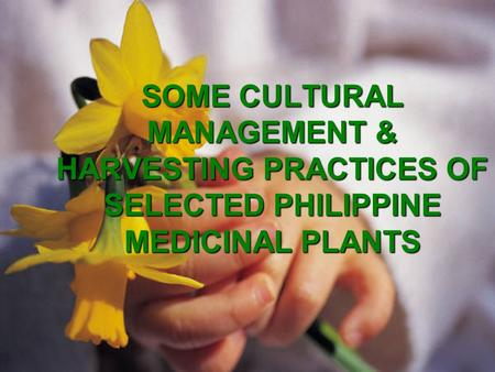 SOME CULTURAL MANAGEMENT & HARVESTING PRACTICES OF SELECTED PHILIPPINE MEDICINAL PLANTS.