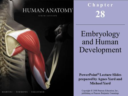 Copyright © 2008 Pearson Education, Inc., publishing as Benjamin Cummings C h a p t e r 28 Embryology and Human Development PowerPoint ® Lecture Slides.