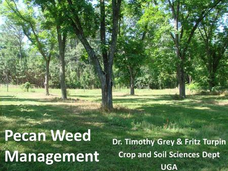 Pecan Weed Management Dr. Timothy Grey & Fritz Turpin Crop and Soil Sciences Dept UGA.