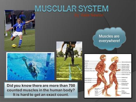 By: Katie Newton Muscles are everywhere!. Think about it if you were a skeleton hanging on a string and your string got cut you would simply fall on the.
