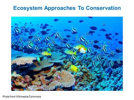 Ecosystem Approaches To Conservation Photo from Wikimedia Commons.