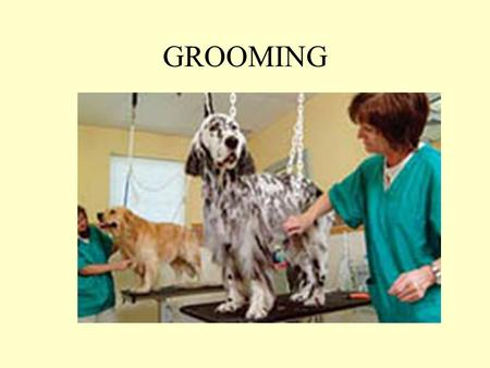 GROOMING. GROOMING The washing, combing, trimming, and brushing of the external parts of a pet.