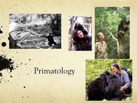 Primatology. Venn Diagram Choose your favourite animal, and make a Venn Diagram about the differences and similarities between you and your favourite.
