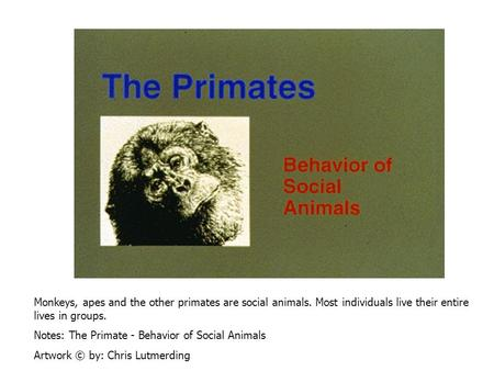 Monkeys, apes and the other primates are social animals. Most individuals live their entire lives in groups. Notes: The Primate - Behavior of Social Animals.