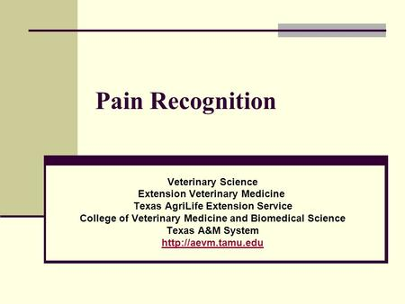 Pain Recognition Veterinary Science Extension Veterinary Medicine Texas AgriLife Extension Service College of Veterinary Medicine and Biomedical Science.