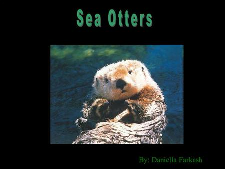By: Daniella Farkash. Sea otters have a small round head, closeable nostril, ears with flaps and small eyes that are good for seeing in and out of the.