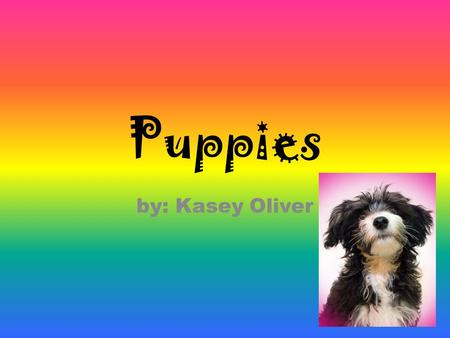Puppies by: Kasey Oliver Puppies *Your dog will be a big part of your family *Your dog needs lots of exersise. *You will have to groom every part of.