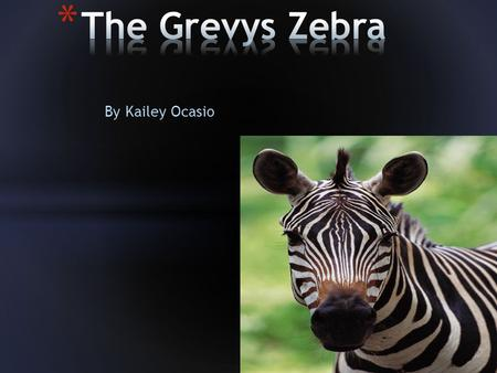 By Kailey Ocasio. The Grevy zebra is named after former French president Jules Grevy's.