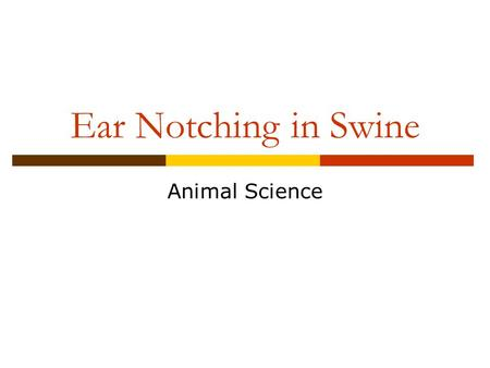 Ear Notching in Swine Animal Science. Objectives  Identify the reasons for ear notching  Indicate the best age to ear notch swine  Explain the equipment.