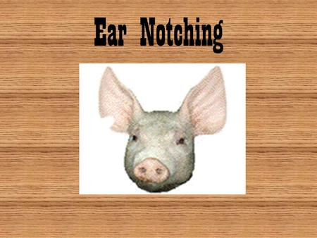 Ear Notching. Introduction Why do we use animal identification? –K–Keep current health records Ex: diseases, immunizations, medications, etc. Most common.