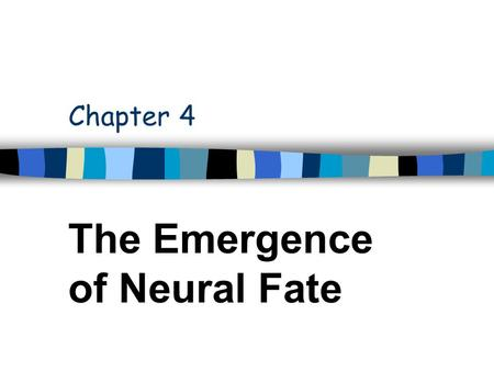 Chapter 4 The Emergence of Neural Fate. PNS Neurons in one Abdominal Hemisegment d v' l v.