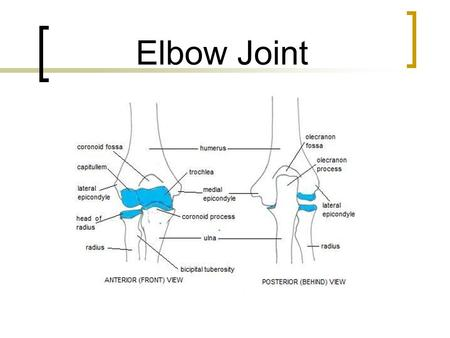 Elbow Joint.
