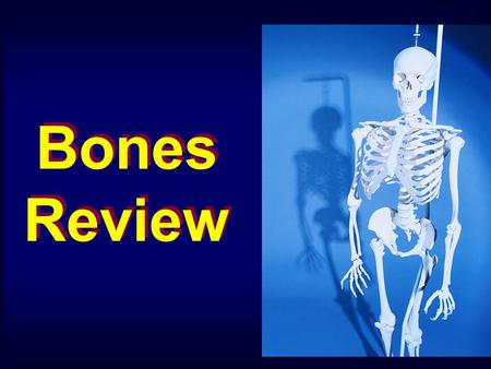 Bones Review. Occipital Bone Frontal Bone Temporal Bone Sphenoid Bone Nasal Bone Maxilla Bone Mandible Bone External Acoustic Meatus Mastoid Process Styloid.