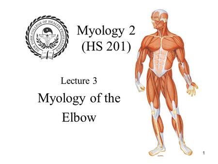 1 Myology 2 (HS 201) Lecture 3 Myology of the Elbow.