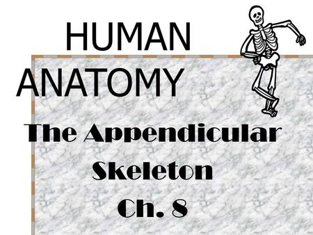 The Appendicular Skeleton Ch. 8 HUMAN ANATOMY. LATIN TERMS to know! Pect = breast Pelv = basin Sutur = seam Meta = after, adjacent Articulus = come together,