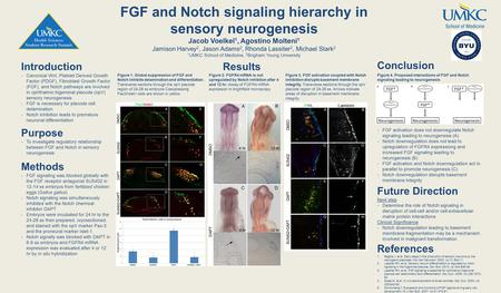 FGF and Notch signaling hierarchy in sensory neurogenesis Jacob Voelkel 1, Agostino Molteni 1 Jamison Harvey 2, Jason Adams 2, Rhonda Lassiter 2, Michael.