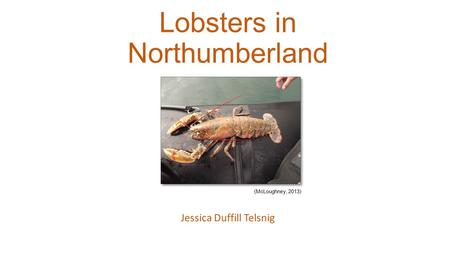 Lobsters in Northumberland Jessica Duffill Telsnig (McLoughney, 2013)