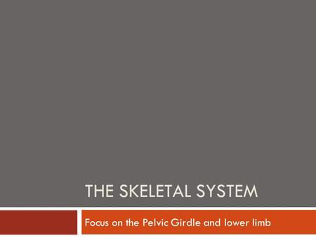 THE SKELETAL SYSTEM Focus on the Pelvic Girdle and lower limb.