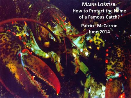 M AINE L OBSTER : How to Protect the Name of a Famous Catch? Patrice McCarron June 2014.