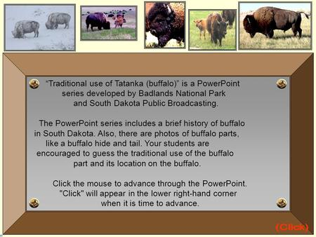 """Traditional use of Tatanka (buffalo)"" is a PowerPoint series developed by Badlands National Park and South Dakota Public Broadcasting. The PowerPoint."