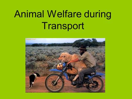"Animal Welfare during Transport. Impact of 1/2005 on welfare of animals The IBF consortium carried out the project ""Study on the impact of Regulation."